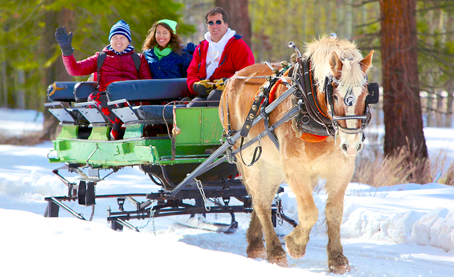 Horse Pulled Sleigh Rides